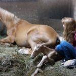 Horse, Gave Birth, Beautiful Foal, foal, Miracle, Birth,