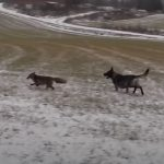 I Was Scared When, The Fox, Snuck Up On ,This Dog,dog,fox,scare,snuck,animals video