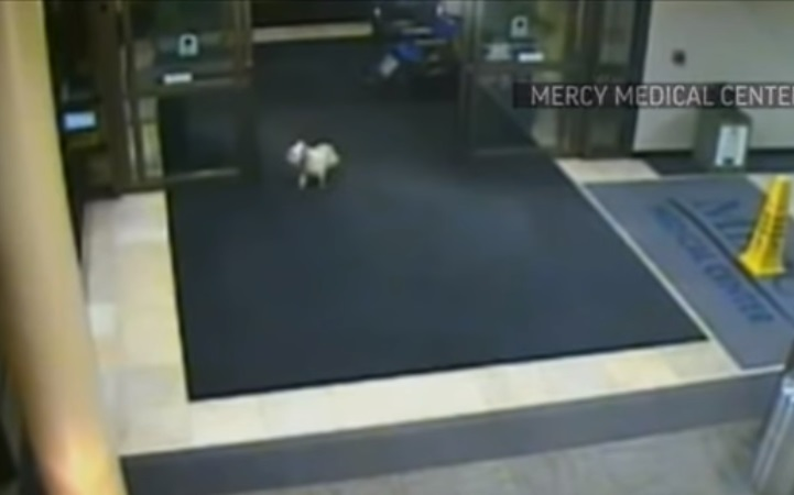 Security Cameras ,Catch, Dog, Sneak, Hospital, Camera, Security, unbelievable, Loyality,