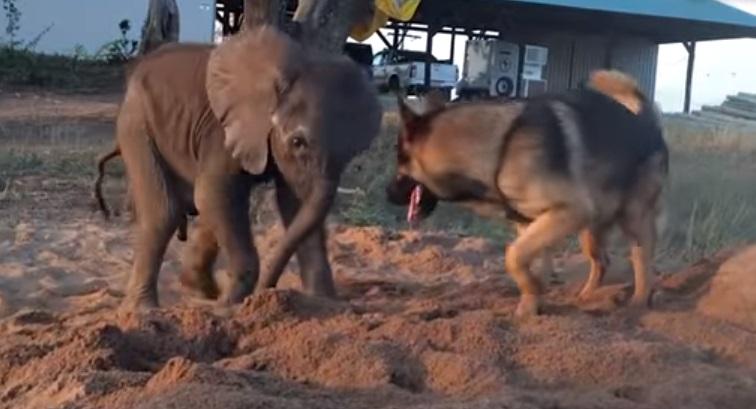 Baby Elephant, Herd, Elephant, Baby, cute, animals, adorable, amazing,