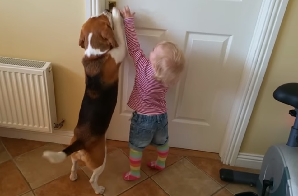 Cute, dog, puppy, little girl, girl, kid, adorable, friends,