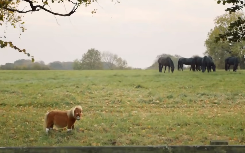 TINY Horse ,Was Ignored ,By The Others,others,horse,tiny,ignor,video,animals