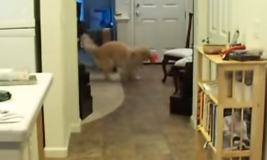 Dog Clean, The House,Dog ,Clean The House,The House, Clean, House,video