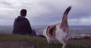 Cat, Human, Face, disablilty, blind animals, adventure, nature,
