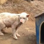 She Sees A Dog Chained Outside In Freezing Cold