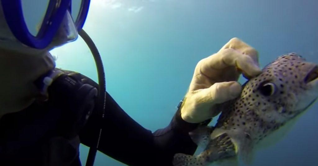 Selfie, Underwater, Underwater Selfie, PufferFish, Fish, Diver, Ocean, Amazing,