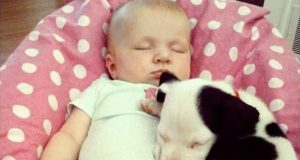 Puppy, Baby, Growing Up, Together, cuteness, cute, adorable, Priceless, Memories,