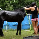 recuing a senior horse from a Certain Death