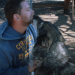 Veterans suffering from PTSD Are Healing With The Help Of Rescued Wolves