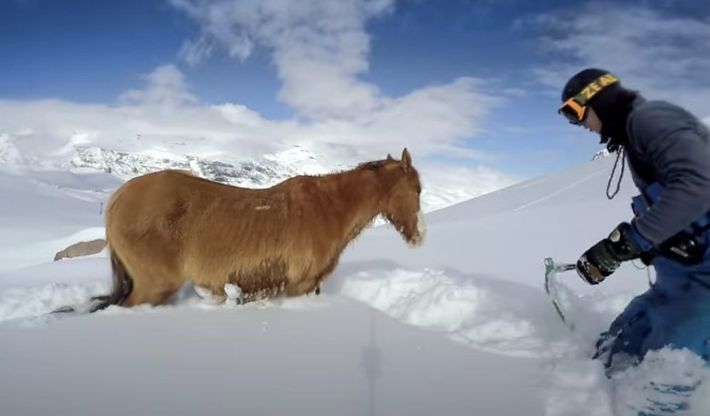 Horse, Freezing, Snow, rescue, snowboarder, snowboard, cold, amazing, Story,