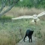 Unlikely friendship between a Cat and Owl