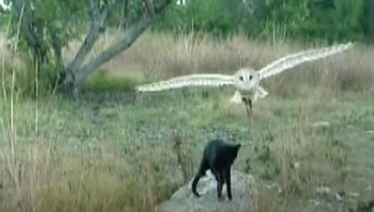 Cat, Owl, Food, unlikely friendship, friends, friendship, animals, weird,