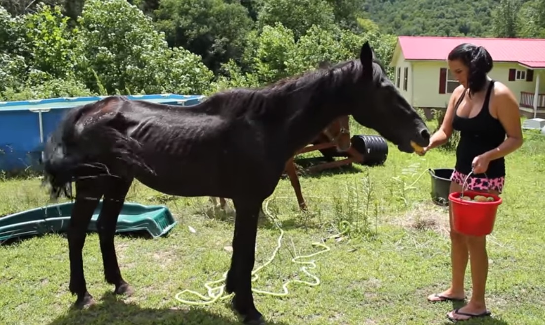 Abandoned Horse, rescue, Help, Horse, Abandoned, beggin, amazing story, animals,