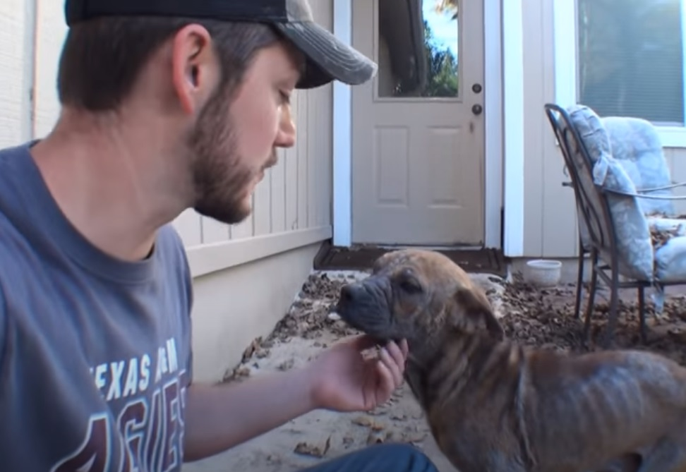 Blind Pup, Euthanized, Puppy, dog, rescue story, inspiring, trending,