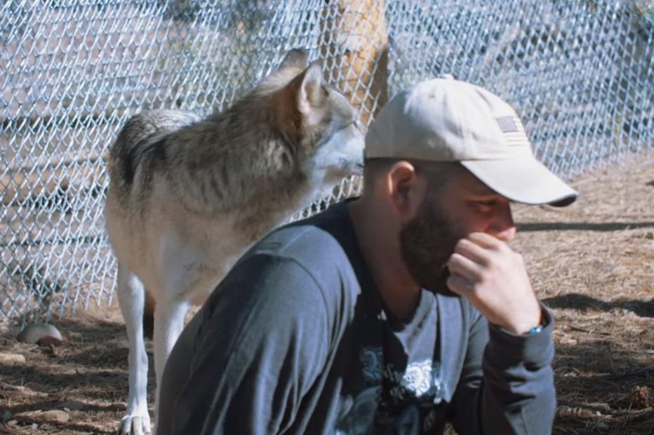 Hungry, sneak, Wolf, veterans, PTSD, cure, healing, suffer, Wolves,