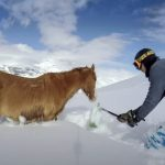 Snowboarder save the life of freezing horse