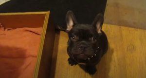 Mom, French Bulldog, Bed, French, Bulldog, dog, pet, cuteness, cute, adorable, funny,