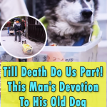 A Genius Invention for Old Dogs