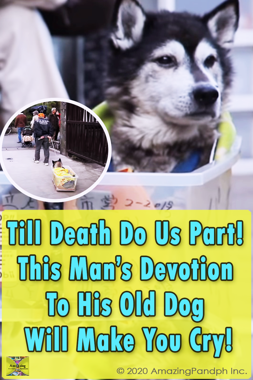 Old Dog, Dog, old, partner, sad story, Touching, Invention, Owner,