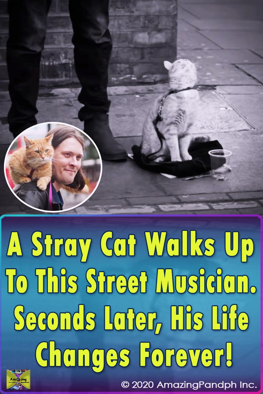Stray Cat, Street Musician, Music, Street , Musician, stray pets, Cat, story, amazing, Touching, friends, homeless,