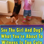 Adorable friendship between a girl and a dog
