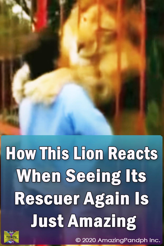 Lion, Rescuer, big cat, Rescue, amazing, friends, hug,