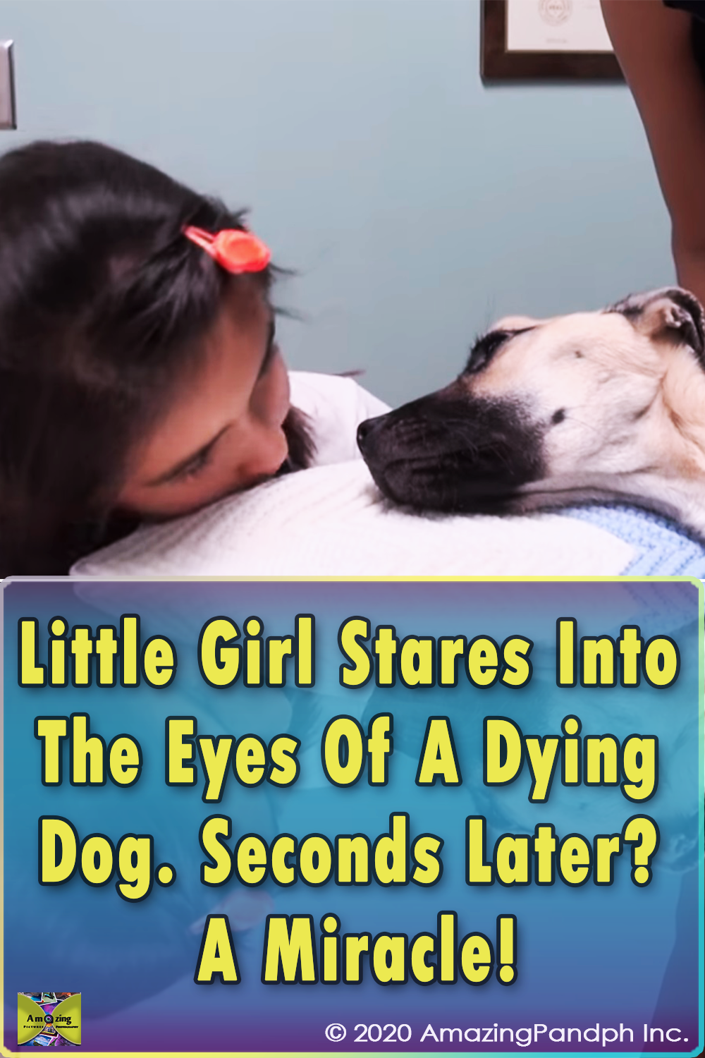 Girl, Eyes, Dog, Stare, animal, pets, Save life, Rescue,
