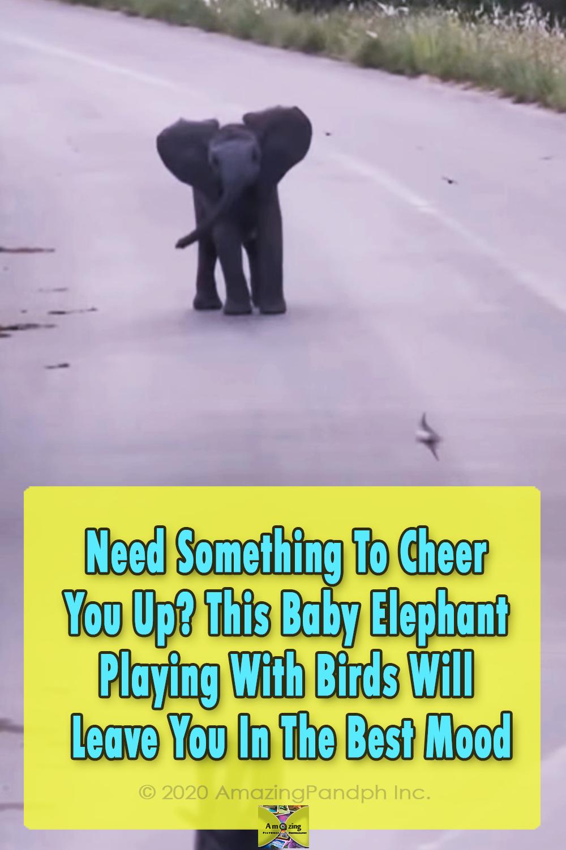 Baby, Elephant, Birds, animals, beautiful, sweet,