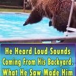 Bear enjoy the pool party in backyard