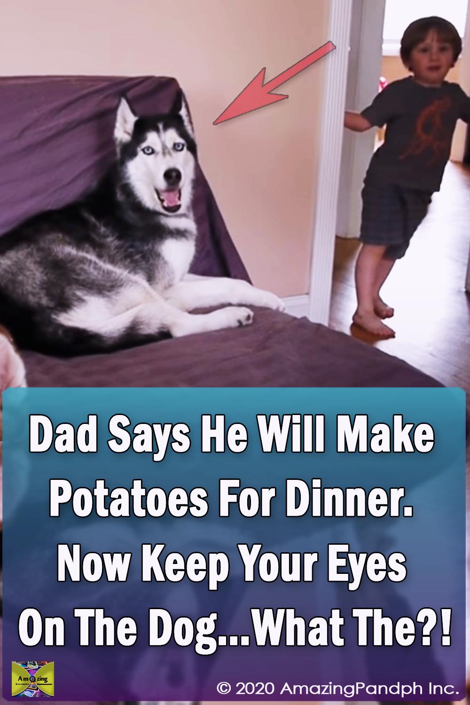Potatoes, Dinner, Potatoe, cook, dog, face, speak, Funny, Home, Dad,