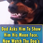 Dog Show His Mean Face