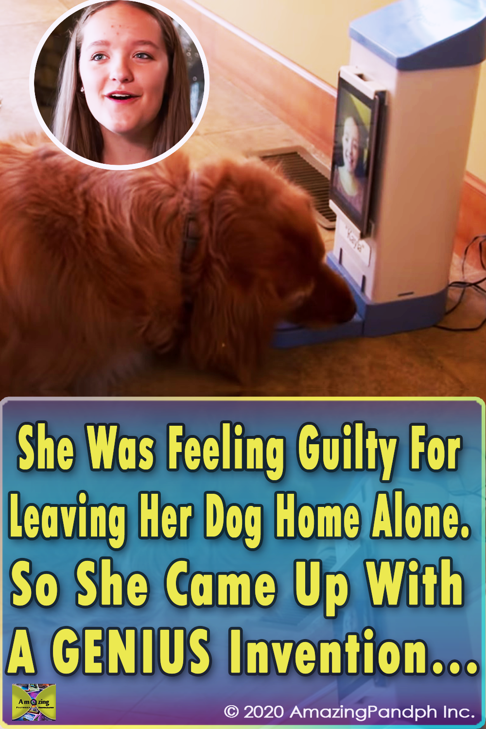Guilty, Dog, Home, animals, pets, Genius, Invention,