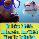 Diver get Selfie with a PufferFish