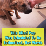 Inspiring Rescue Story of a blind Pup