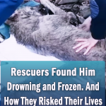 Inspiring Story of A Rescued frozen wolf