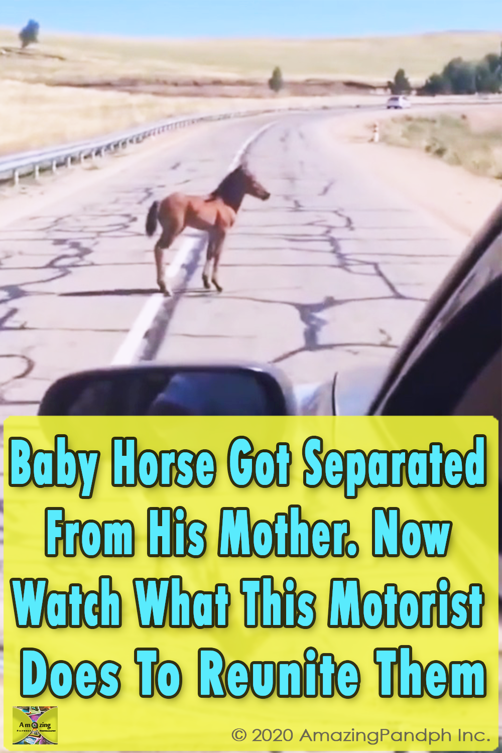 Baby Horse, Separated, Mother, Horse, Baby, reunion, Cars, Road, Lost,