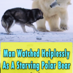 Polar bear forms unlikely friendship