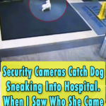 Security Cameras Catch Dog Sneaking Into Hospital