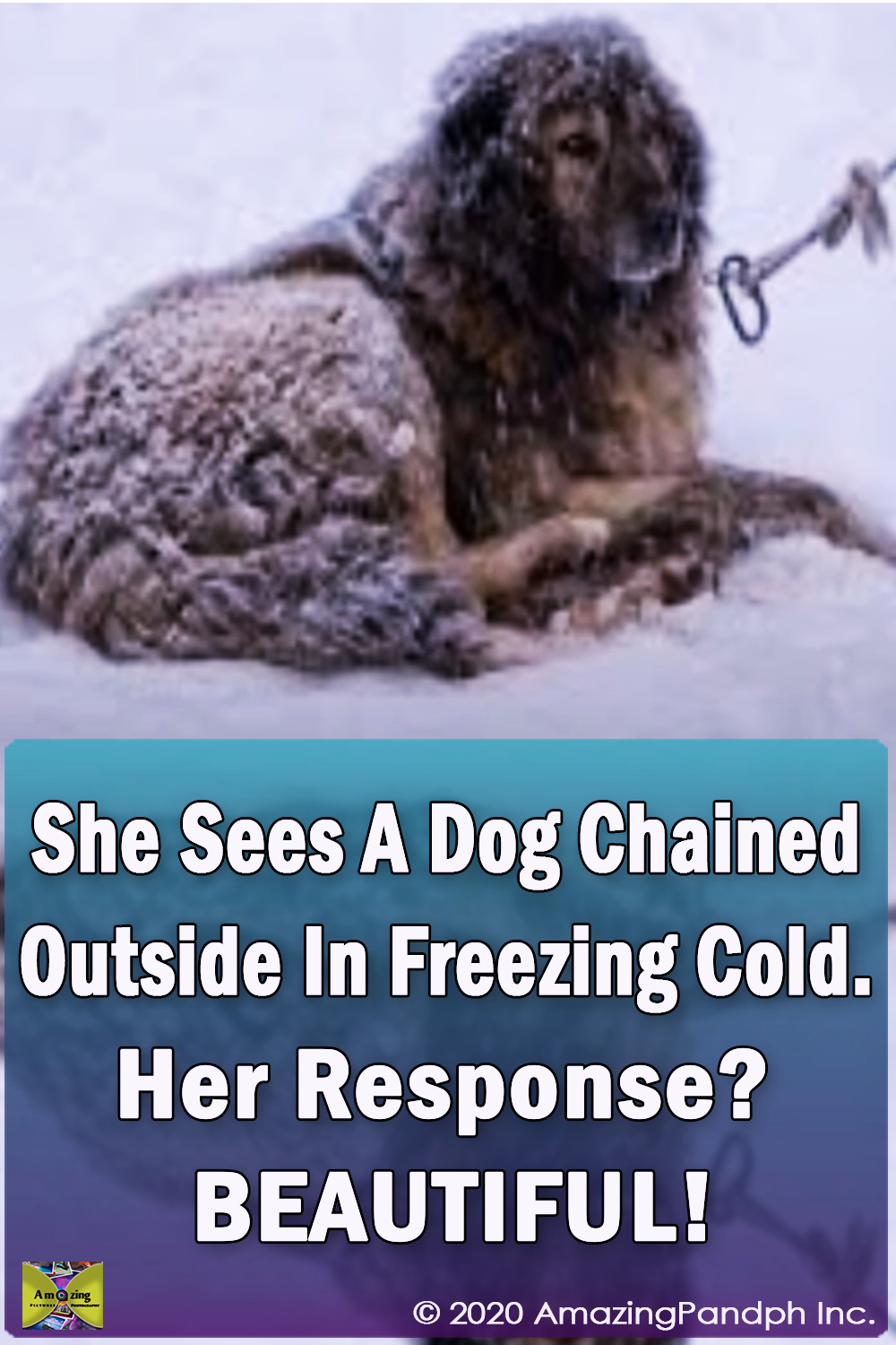 Chained dog, Outside, Freezing, Cold, Dog, Chain, Freez, song, shelter, stray dog,