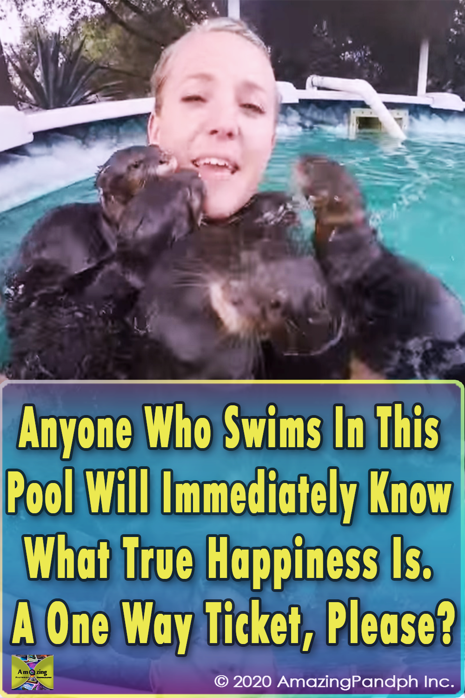 Swimming, pool, adorable, creatures, Swim, amazing, cuteness, Otter,