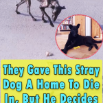 They Gave This Stray Dog A Home To Die In