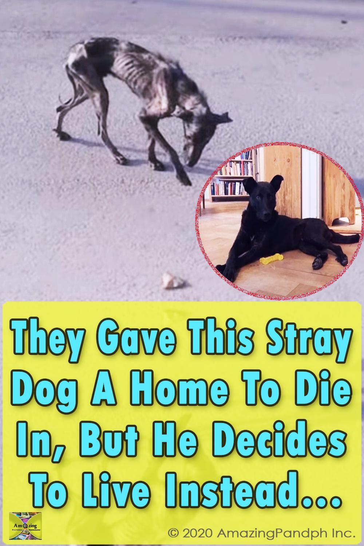 Stray Dog, Home, dog, stray, emotional, rescue, adoption,