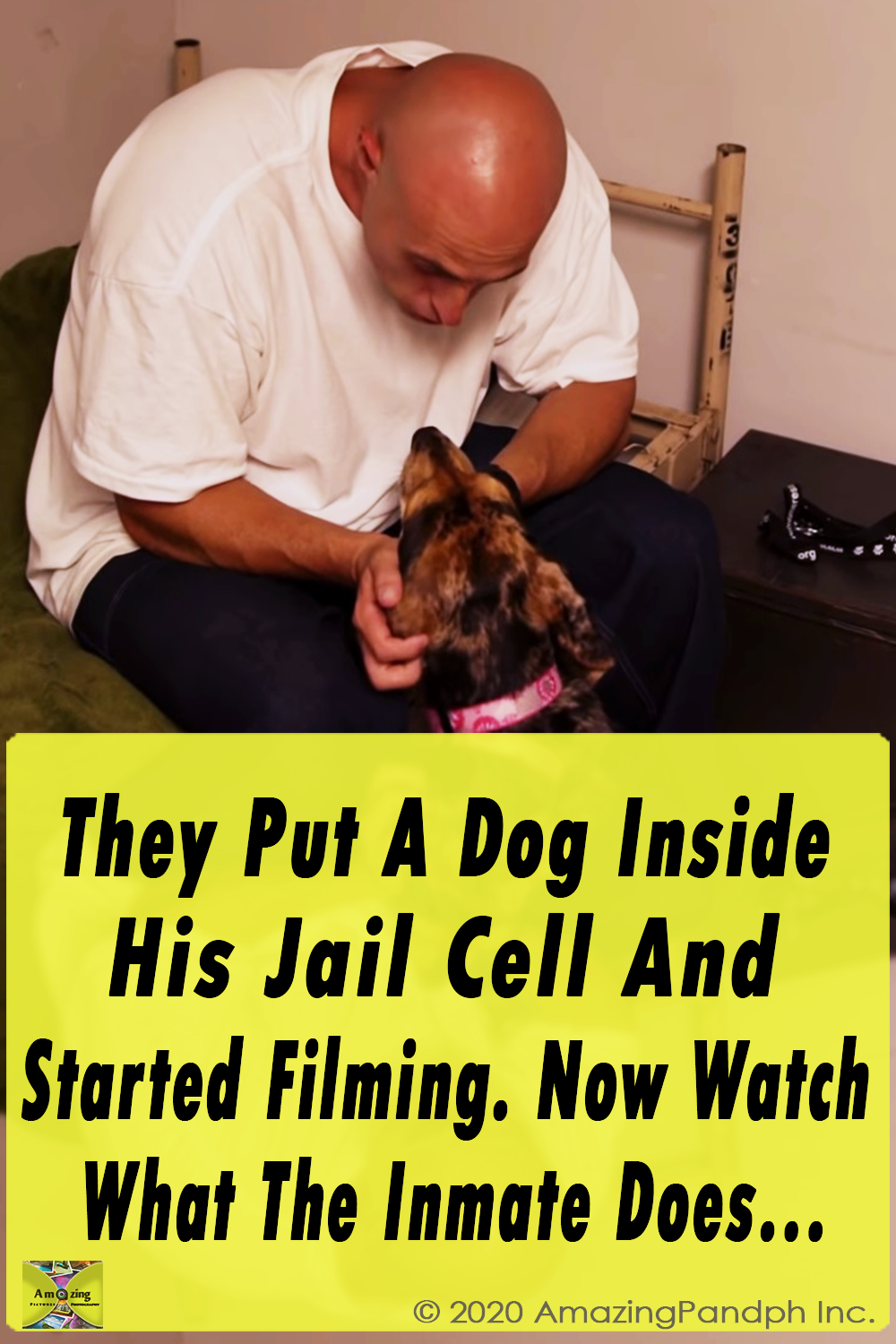 They Put ,A Dog Inside ,His Jail ,Cell , Started Filming,film,video,dog,cellmate