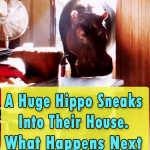 This Hippo is the Weirdest pet ever
