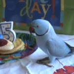 Parrot celebrate his 5 years old