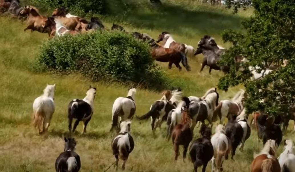 Horses, Free, rescue, story, animals, new life,