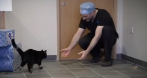Miracle, Medical Technology, story, cats, animals, Pets,
