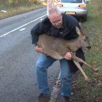 Emotional rescue of an injured deer
