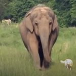 Unique relationship between a dog and elephant