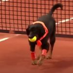 """Street dogs Working as """"ball boys"""""""